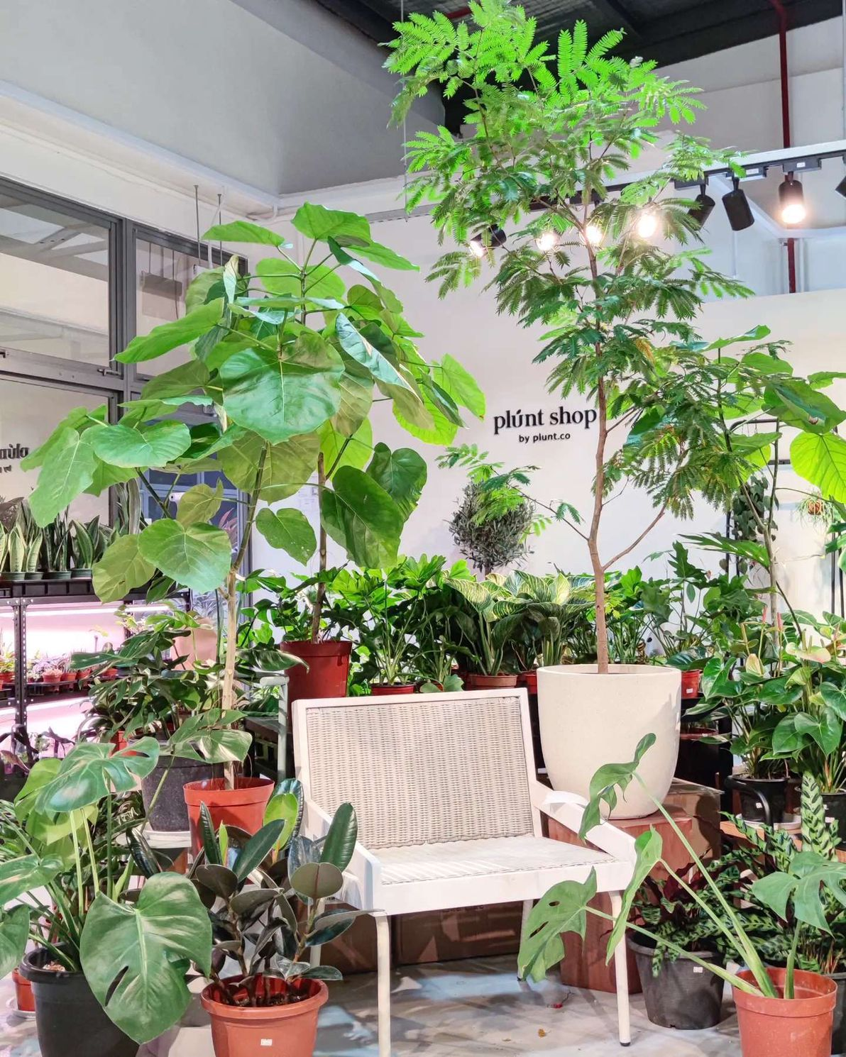 plunt shop singapore