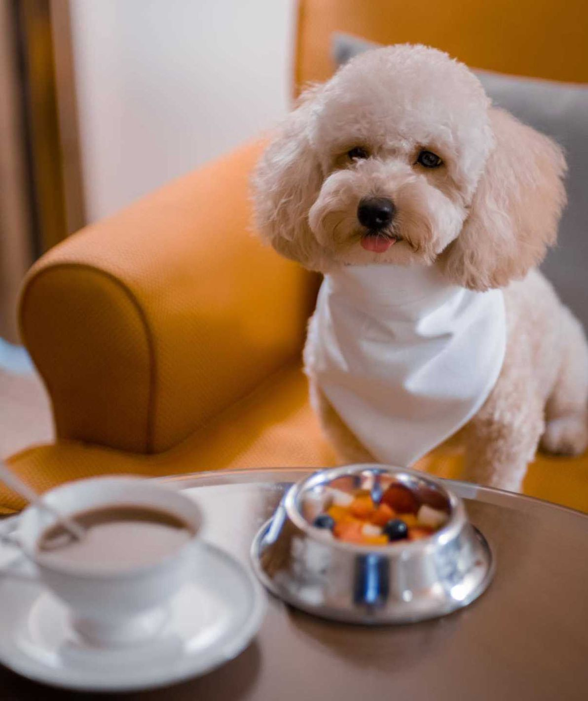 Pet-Friendly Hotels in Singapore to Visit For Your Next Staycation
