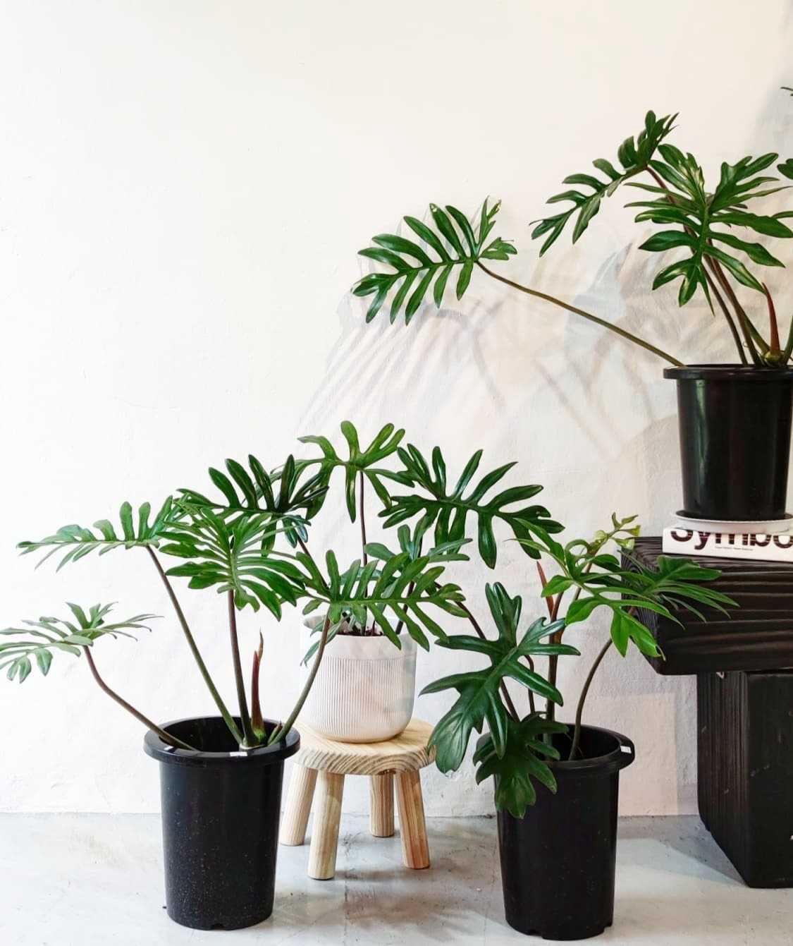 6 Trendy Boutique Plant Shops Around Singapore