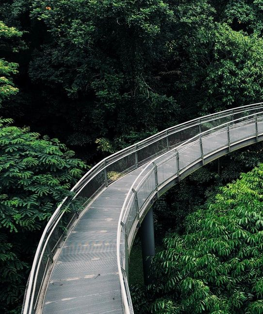 Best Nature Parks To Explore Near The Thomson-East Coast Line